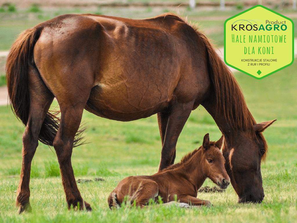 Ogromnie Hala namiotowa jako ujeżdżalnia dla koni - Krosargo KG06