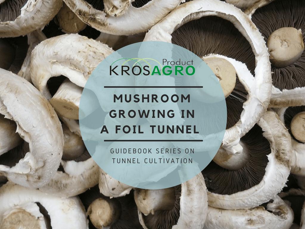 Mushroom growing in a foil tunnel - Krosagro