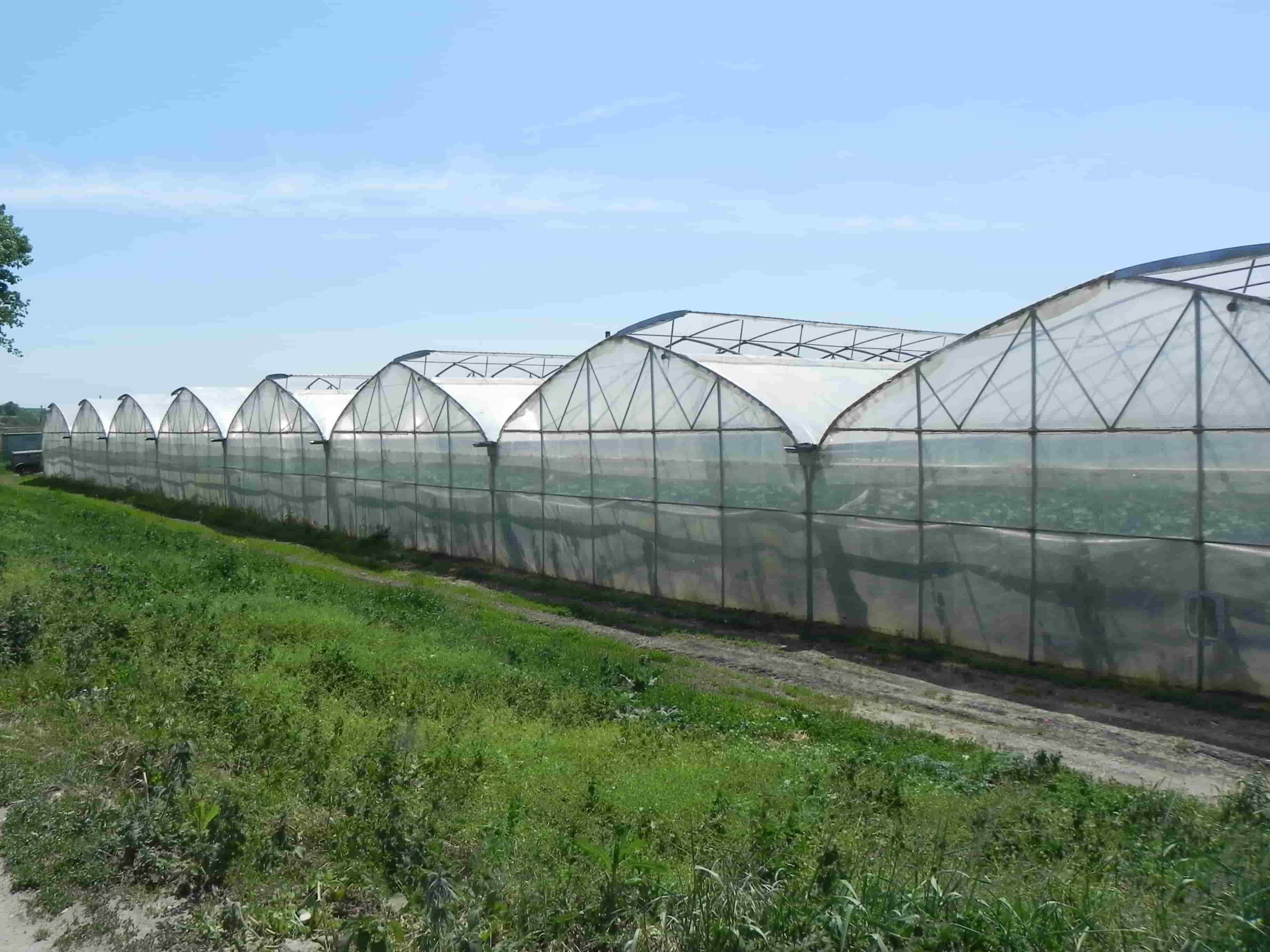 Carpas agrícolas para la producción industrial.