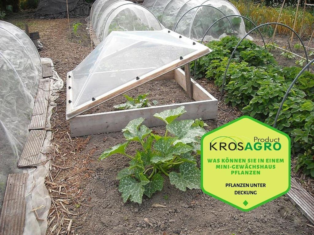 Was können Sie in einem Mini-Gewächshaus pflanzen - Gewächshaushersteller - Krosagro